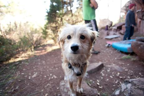 Sara's and Sam's rescue dog Seren.